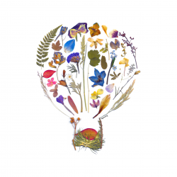Pressed Flowers - Hot Air Balloon