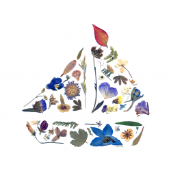 Pressed Flowers - Sailboat